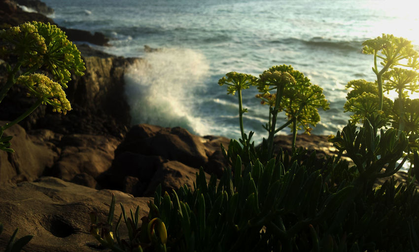 EyeEmEsterlindaBeauty In Nature Calm Cliff EyeEm Nature Lover Italy Mediterranean  Nature New Eye Em No People Rock Scenics Sea Solitude Tranquil Scene TranqUility Wave Crithmum Maritimum