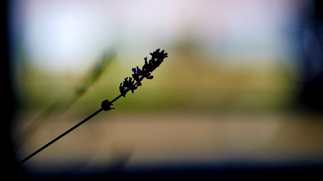 Silhouette Of Twig