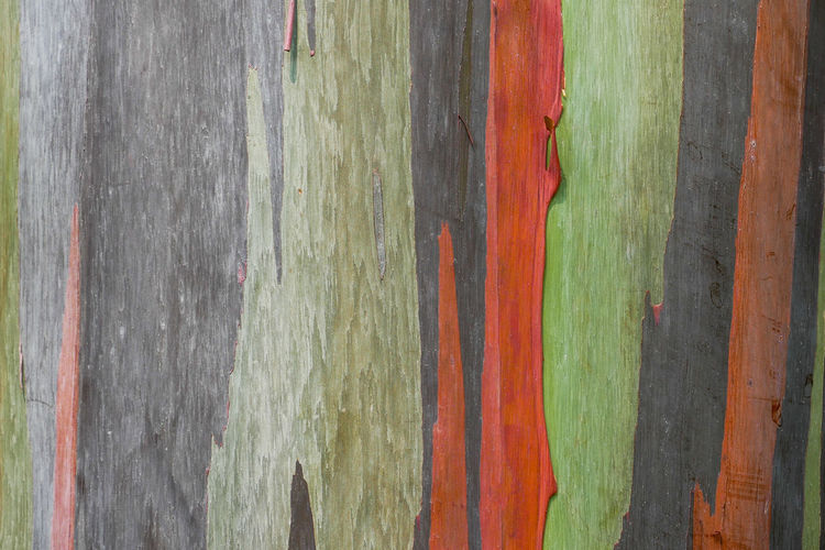 Backgrounds No People Full Frame Wood - Material Multi Colored Textured  Close-up Pattern Red Outdoors Day Paint Green Color Striped Wood Plank Plant Nature Art And Craft Boundary