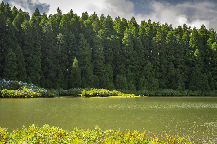 Lagoa do canario - view of the green lagoon of canary lake in sao miguel island, azores, portugal