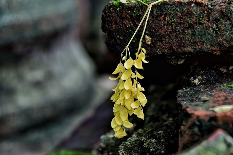 Outdoors Nature No People Close-up Leaf Day Beauty In Nature Fragility