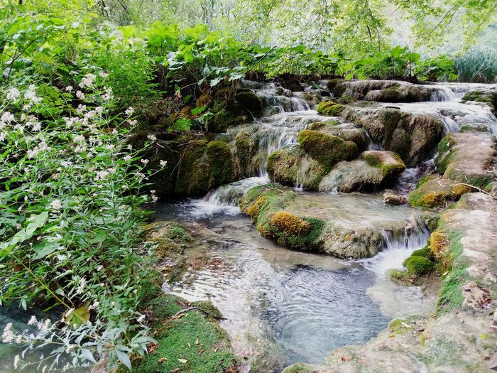 Nature Water Day No People Outdoors Grass Beauty In Nature Green Color Tranquility Tranquil Scene Aigua Salt D'aigua Bosc Summer Estiu