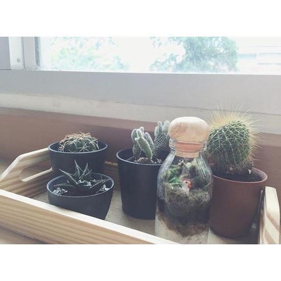 ล ง มื อ ทำ . (ซื้อเอาดีกว่าทำเอง55++) Cactus Terrarium🍀