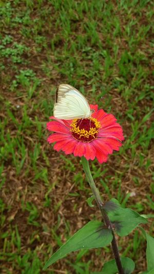 Nature Nofilter Nofilter#noedit Butterfly Green Nature On Your Doorstep Natureza Beatiful Nature First Eyeem Photo