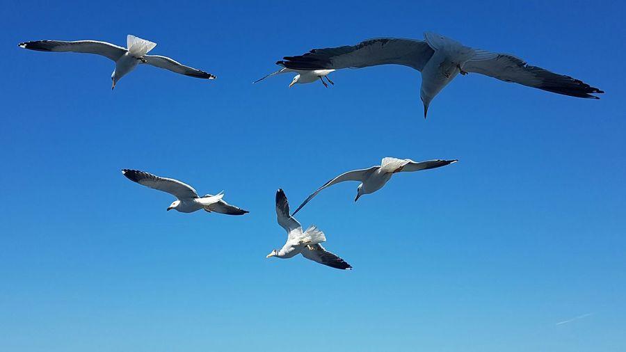 Seagulls in