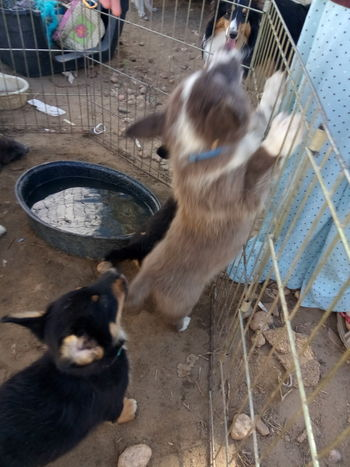auggy puppies Puppy Water Feline Domestic Cat