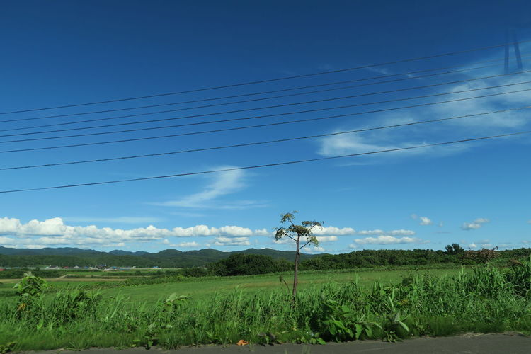 haboro soya region hokkaido japan Grass Growth Road Sign Blue Sky Grass Roll Leaf Seaside Sunnyday EyeEmNewHere Capture Tomorrow Moments Of Happiness It's About The Journey 2018 In One Photograph