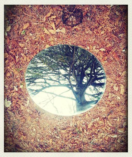 EyeEm Nature Lover Trees Mirror