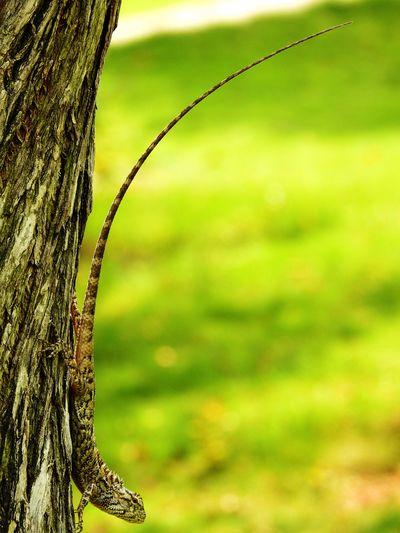 Lizard on tree against field