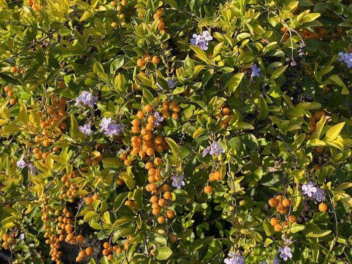 View of purple flowering plants