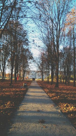 Autumn Autumn Colors Lithuania Nature Trees And Sky Peoples 2015  Followme