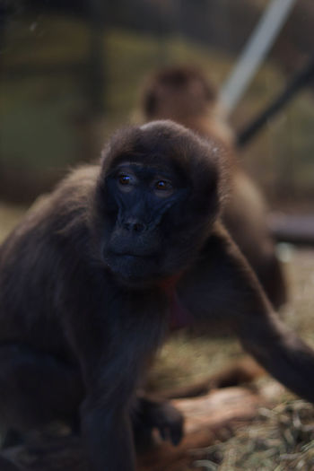 Close up of monkey sitting in zoo