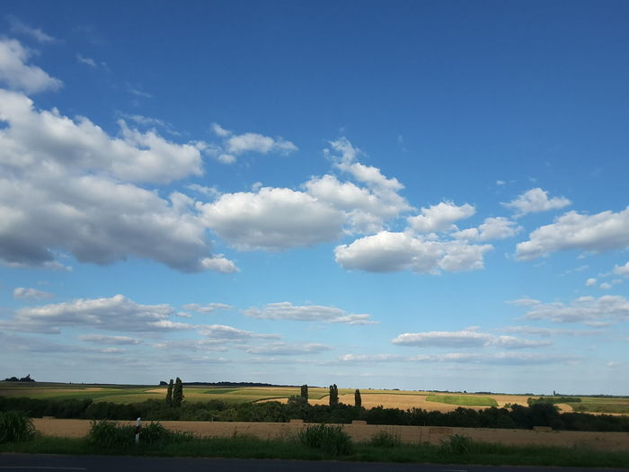 Blue Sky Medow