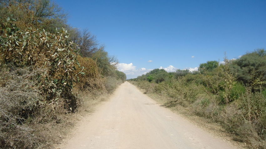 Arboles Beatiful Bitcoin Camino De Los Alamitos Camino De Los Dioses Gods Path Paisaje Paisaje Natural Sky Blue And Clouds Camp