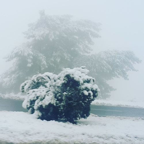 Cold Winter ❄⛄ Day Cold Temperature Little Pine Tree City Of Izmir Nature Sky Karsevinci TBT