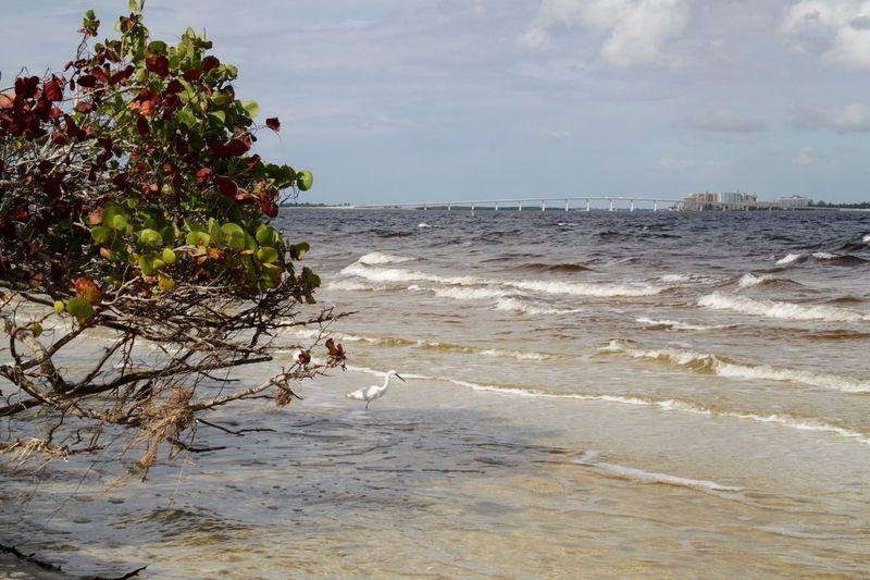 Brown Water Sanibel Causeway Beach Beauty In Nature Bird Cloud - Sky Day Florida Horizon Horizon Over Water Idyllic Land Motion Nature Sanibel Scenics - Nature Sea Sea And Sky Sky Stork Tranquility Water Wave Waves