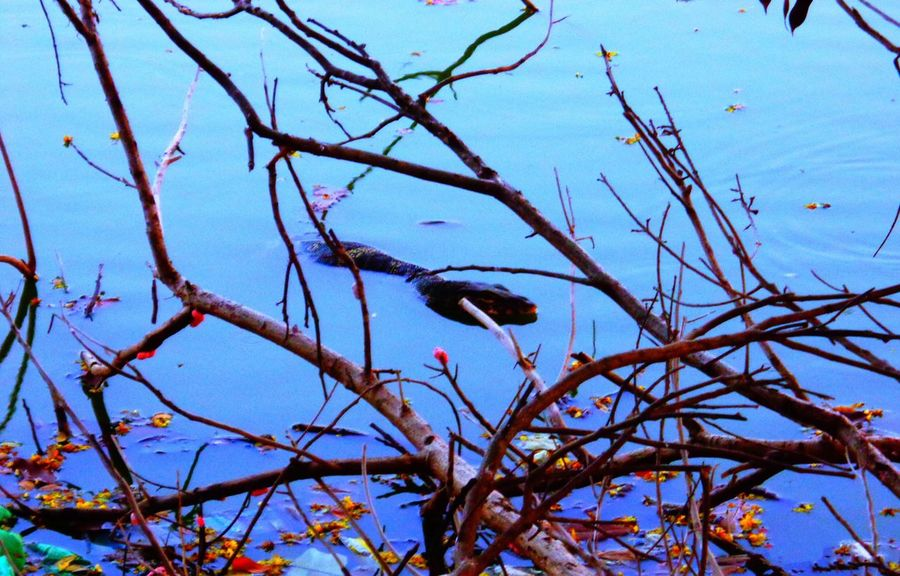 Lake Snake Nature Tree No People Outdoors Branch Day Beauty In Nature Low Angle View Growth Bare Tree Animal Themes