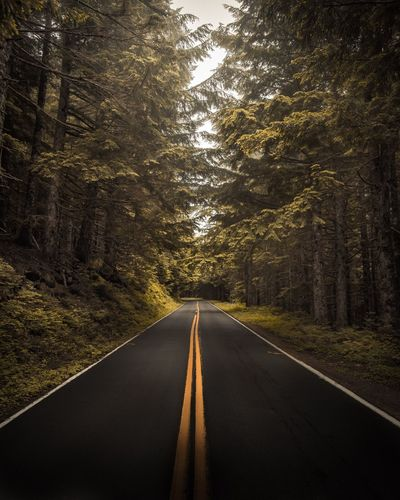 Larch mountain road Road The Way Forward Transportation Road Marking Tree Diminishing Perspective Nature No People Day Tranquility Outdoors Scenics Landscape Beauty In Nature Sky