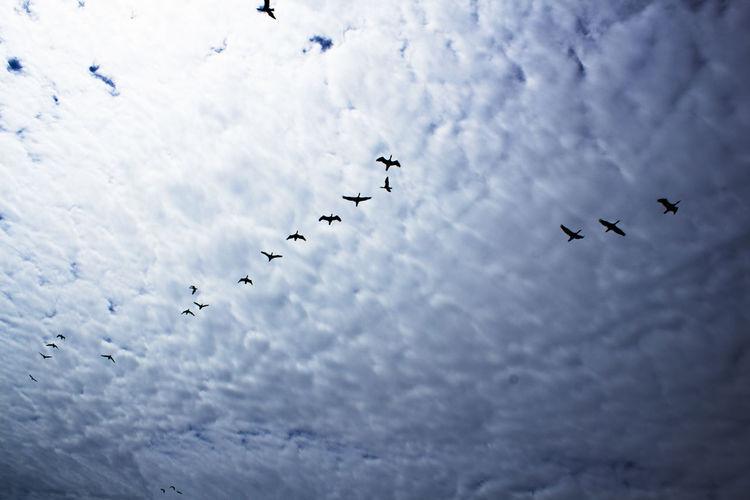 Bird migration against the sky