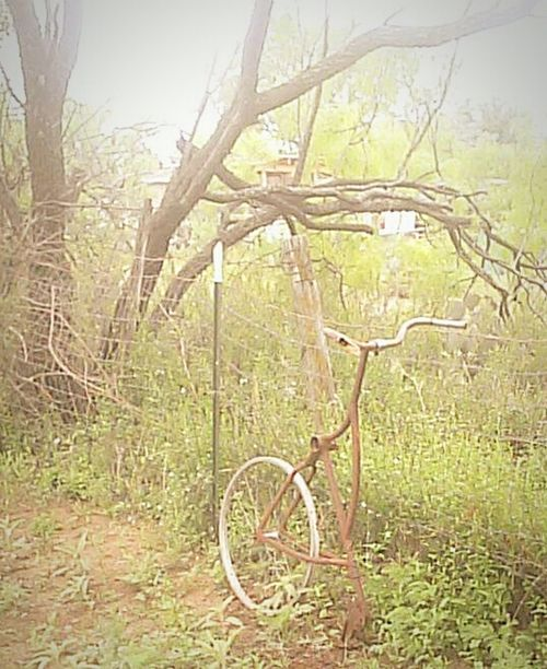 Bicycle No People Tree Outdoors Nature Day Grass Garden Left To Weeds Northside San Angelo Accidents And Disasters