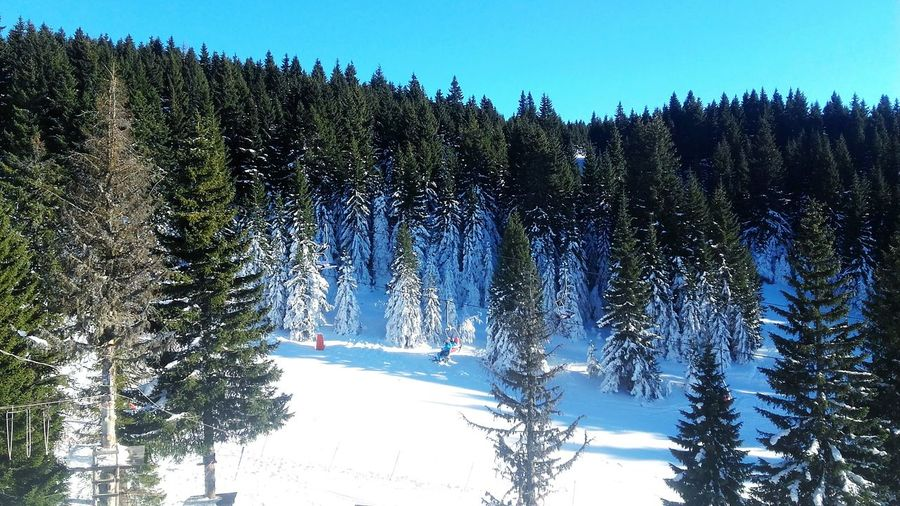 Tree Nature Clear Sky Sky Day Evergreen Tree White Kopaonik, Serbia Skiing Serbia Sport Mountains Snow Winter Wood Forest Blue Blue Sky Kopaonik Nature Beautiful Extreme Sports Beauty In Nature Likeforlike Like4like
