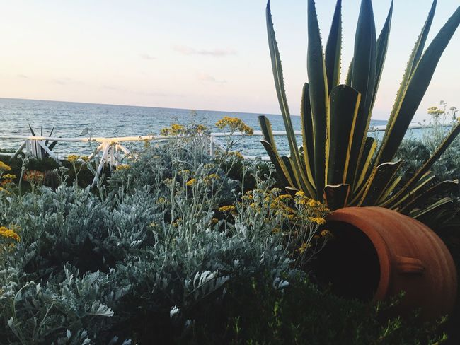 Nature Plant Horizon Over Water Crete Greece Beach Cactus Greece