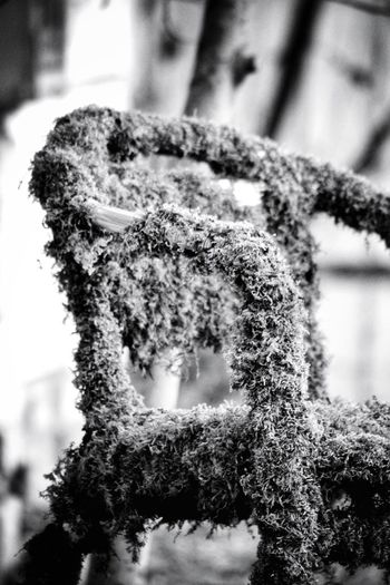 Mossy Chair Moss Mossy Mossporn Moss Close Up EyeEm Selects EyeEm Nature Lover EyeEm Best Shots Chair Chairswithstories Taking Pictures EyeEm Gallery Taking Photos My Point Of View EyeEm Best Shots - Black + White Black And White Blackandwhite Black & White Monochrome Chair Design Nature Close-up Plant Life