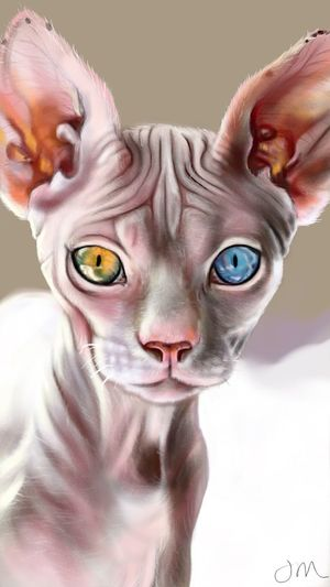 My telepathic listener Domestic Cat Domestic Animals Animal Animals Communication Cat Lovers Catportrait Catdrawing Cat Cats
