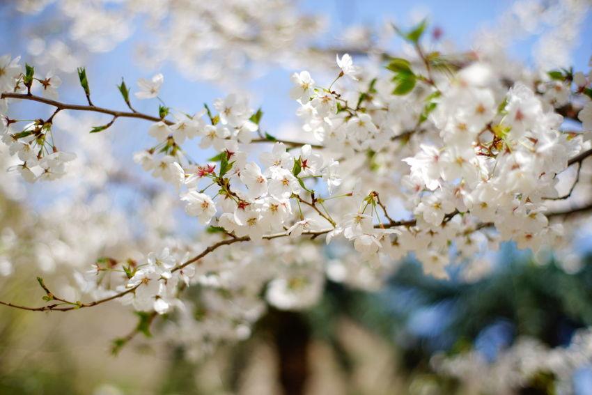 蓟县 盘山 早春 花花草草 Flowers Spring Routine Life 日常 福伦达