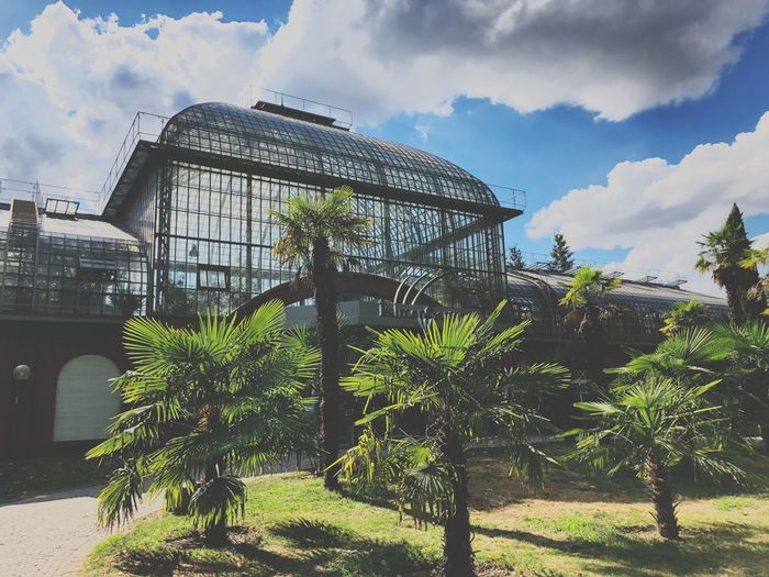 Do you like botanic? Frankfurt Am Main EyeEmNewHere Botanic Tropenhaus Palm Trees Orangerie Cloud - Sky Sky Plant Built Structure Nature Architecture Tree Park Outdoors No People Green Color Day