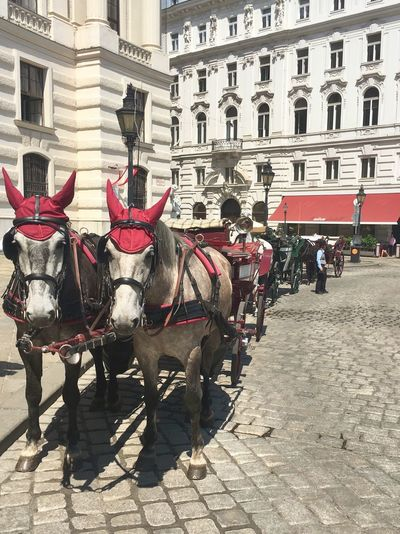 Horses Building Exterior Built Structure Architecture City Building Transportation Mode Of Transportation Street Domestic Animals Horse Cart Working Animal