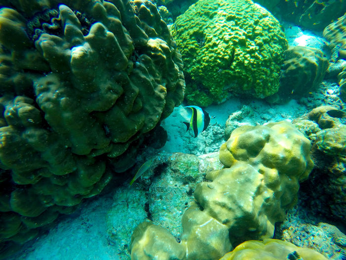 High angle view of coral swimming in sea
