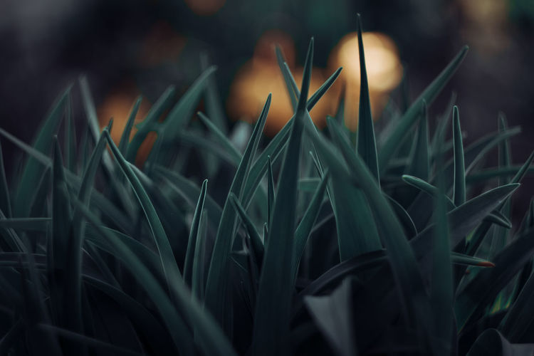 Exceptional Photographs EyeEm Nature Lover Silhouette Change Eye4photography  Poland Simple Beauty Bokehlicious EyeEm Selects Bokeh Love Wiosna Close-up Plant Grass Blooming Blade Of Grass Plant Life Springtime Decadence