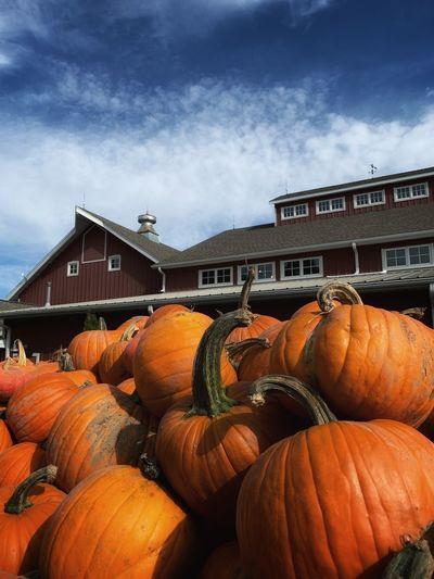 Stack of pumpkins against sky