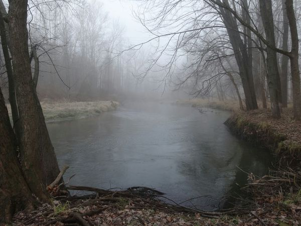 Foggy Morning River Bends Nature Photography Showcase: December Pure Michigan EyeEm Nature Lover The Purist (no Edit, No Filter) Frosty Mornings