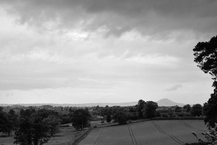 Forton Trees Black & White Farmland Countryside Staffordshire Shropshire Wrekin