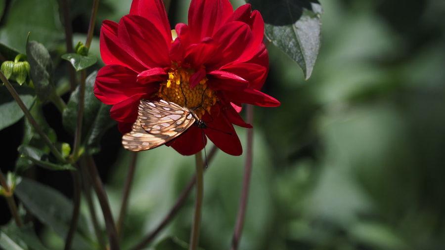 EyeEm Selects Flower Head Flower Red Poppy Petal Close-up Plant