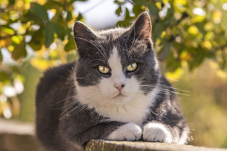 Portrait of cat sitting on wall outdoors