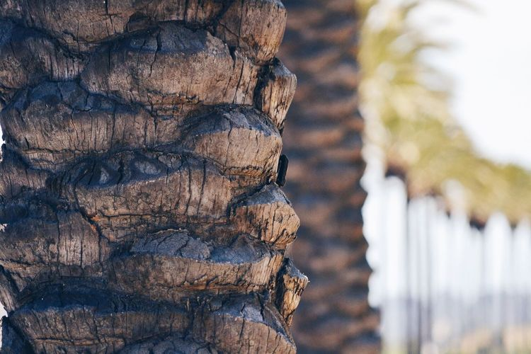 RePicture Wealth not everyone gets to enjoy these? California California Palms Palm Trees