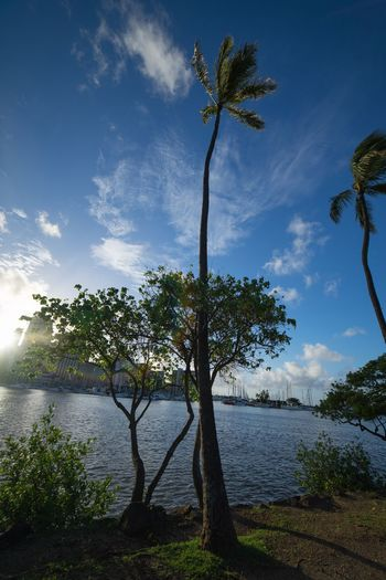 Tree Plant Water Sky Cloud - Sky Growth Nature Scenics - Nature Tranquil Scene Outdoors No People Lake Tree Trunk Beauty In Nature Sunlight Tranquility Day Trunk