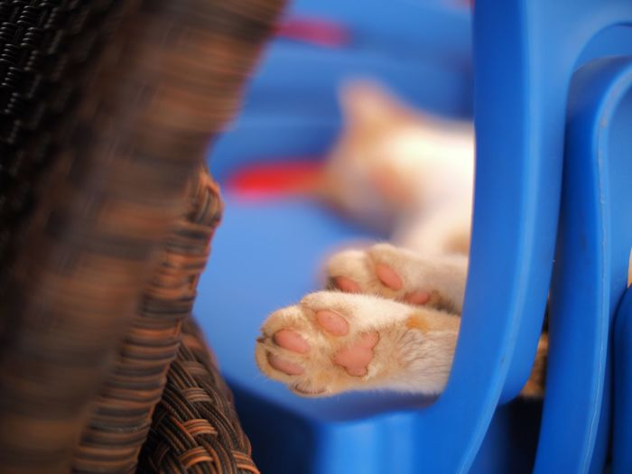 Close-Up Of Cat Sleeping On Chair