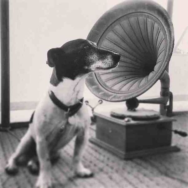 Hmv Hismastersvoice Logo Jackrussell jackrussel terrier antique
