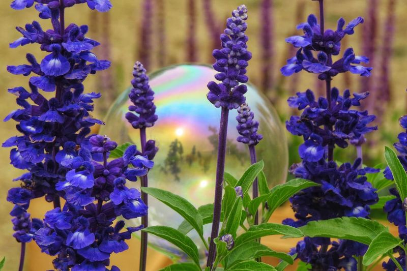 Plant Flower Flowering Plant Growth Vulnerability  Purple Beauty In Nature Selective Focus Plant Stem Focus On Foreground Freshness Close-up