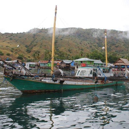 Desakomodo Nusatenggaratimur INDONESIA