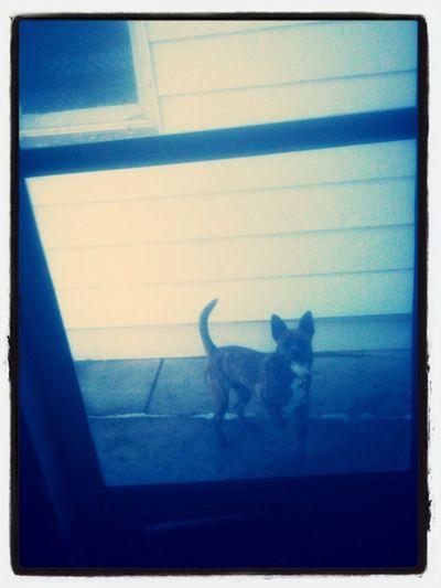 View of cat on window