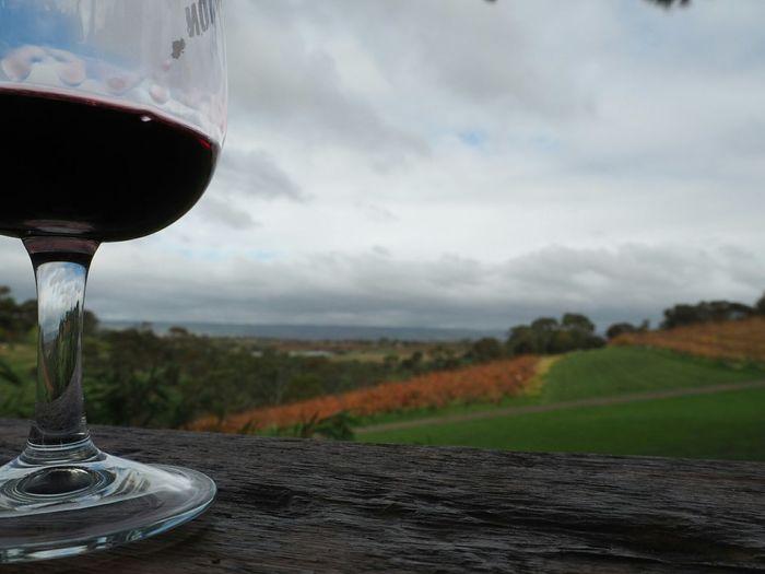 State of Wine! Wine Winetours Wine Tasting Redwine Southaustralia Australia Adelaide View Mclarenvale