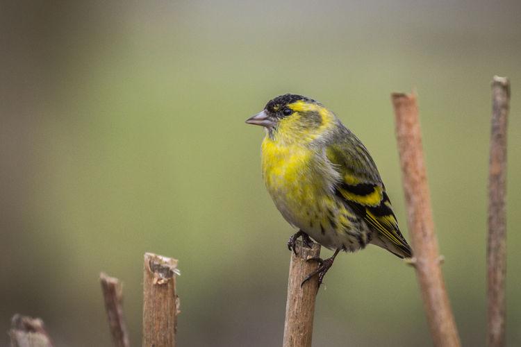 Close-up of bird perching on stick