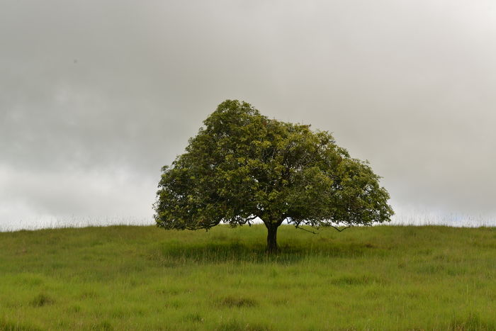 tree Beauty In Nature Cloud - Sky Day Grass Landscape Nature No People Outdoors Single Tree Sky Tree