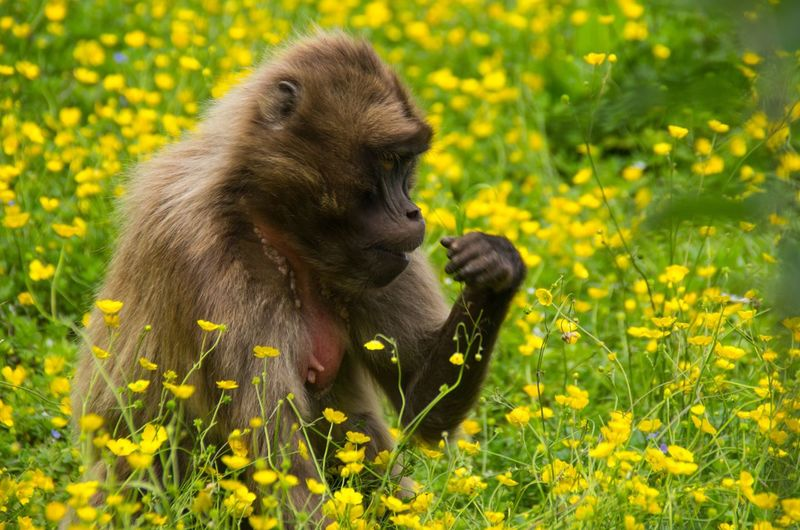Close-up of monkey on field