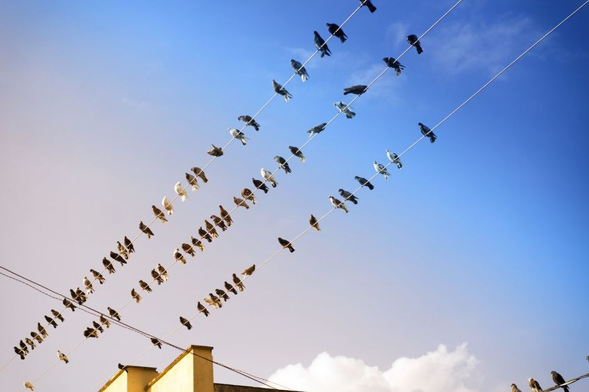Nature Nature Photography Day Flying Low Angle View Nature_collection No People Outdoors Sky Teamwork Urban EyeEm Ready